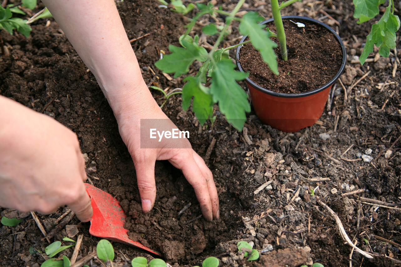 human hand, growth, dirt, hand, gardening, nature, human body part, plant, high angle view, plant part, leaf, one person, planting, day, beginnings, real people, agriculture, holding, lifestyles, outdoors, care, finger, mud, flower pot