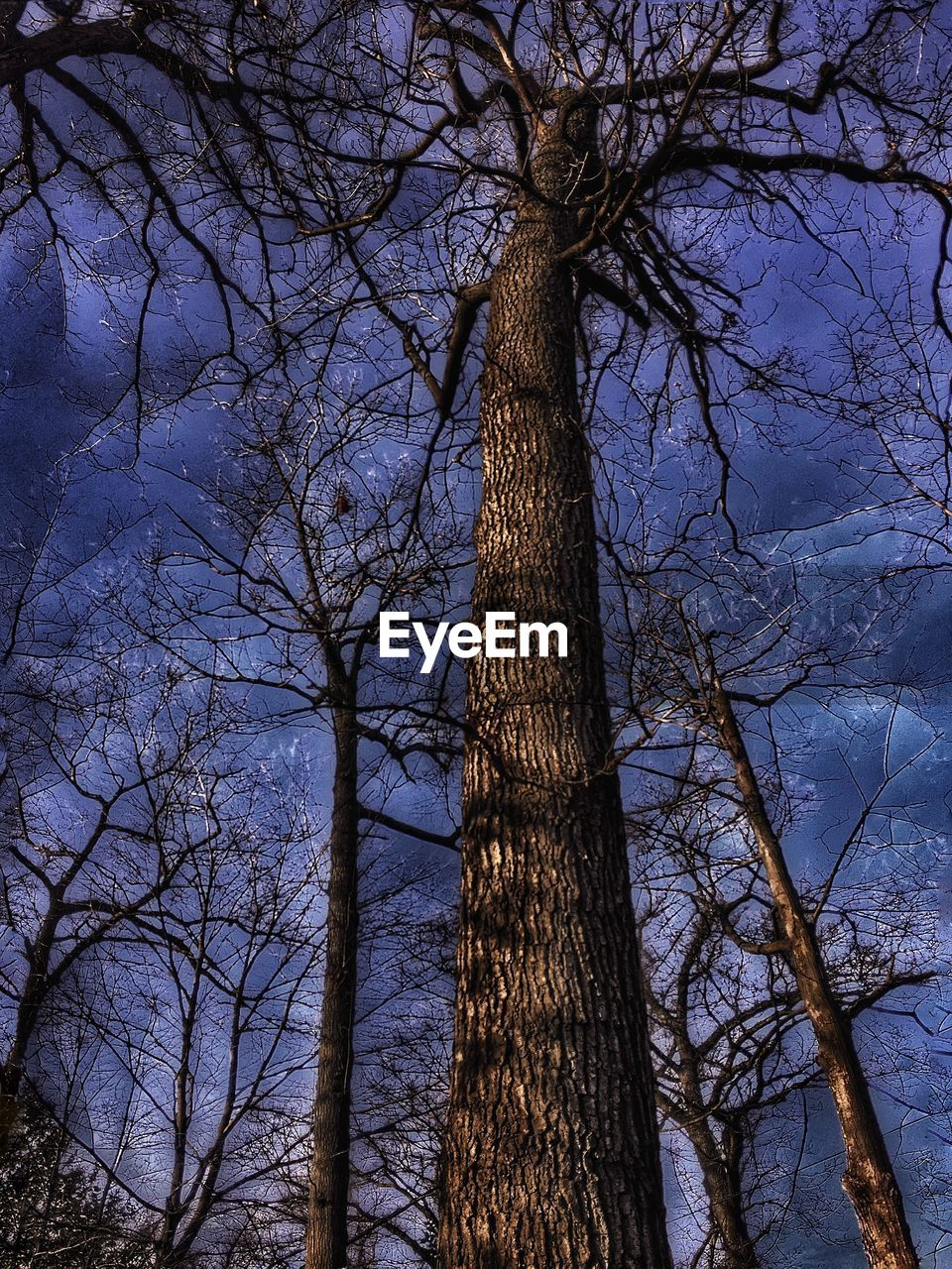 tree, tree trunk, bare tree, branch, nature, no people, forest, outdoors, low angle view, beauty in nature, day, growth, tree area, sky