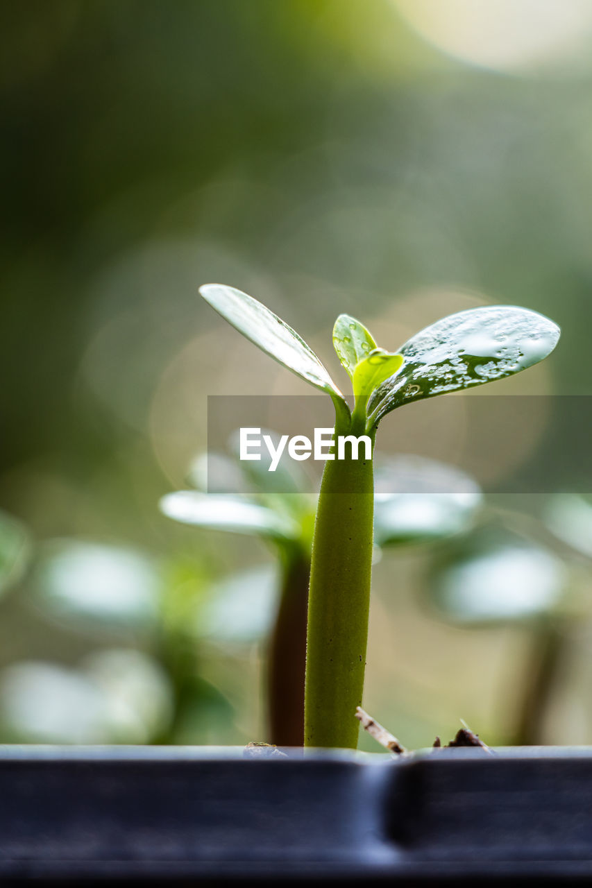 CLOSE-UP OF GREEN PLANT ON WHITE FLOWER