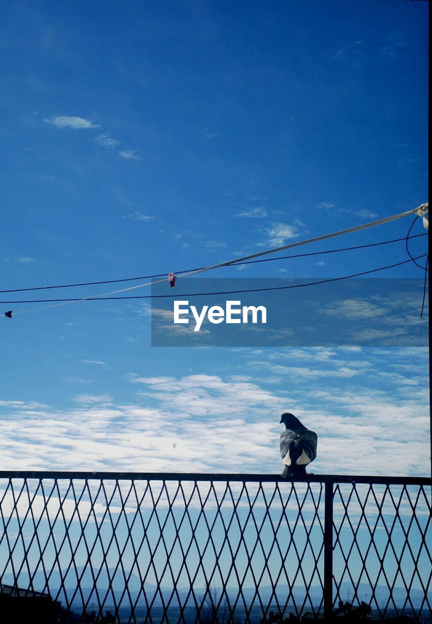 animal themes, one animal, sky, cloud - sky, bird, animals in the wild, cable, no people, outdoors, animal wildlife, day, nature, mammal, domestic cat, feline, pets, perching, raven - bird, domestic animals, sparrow