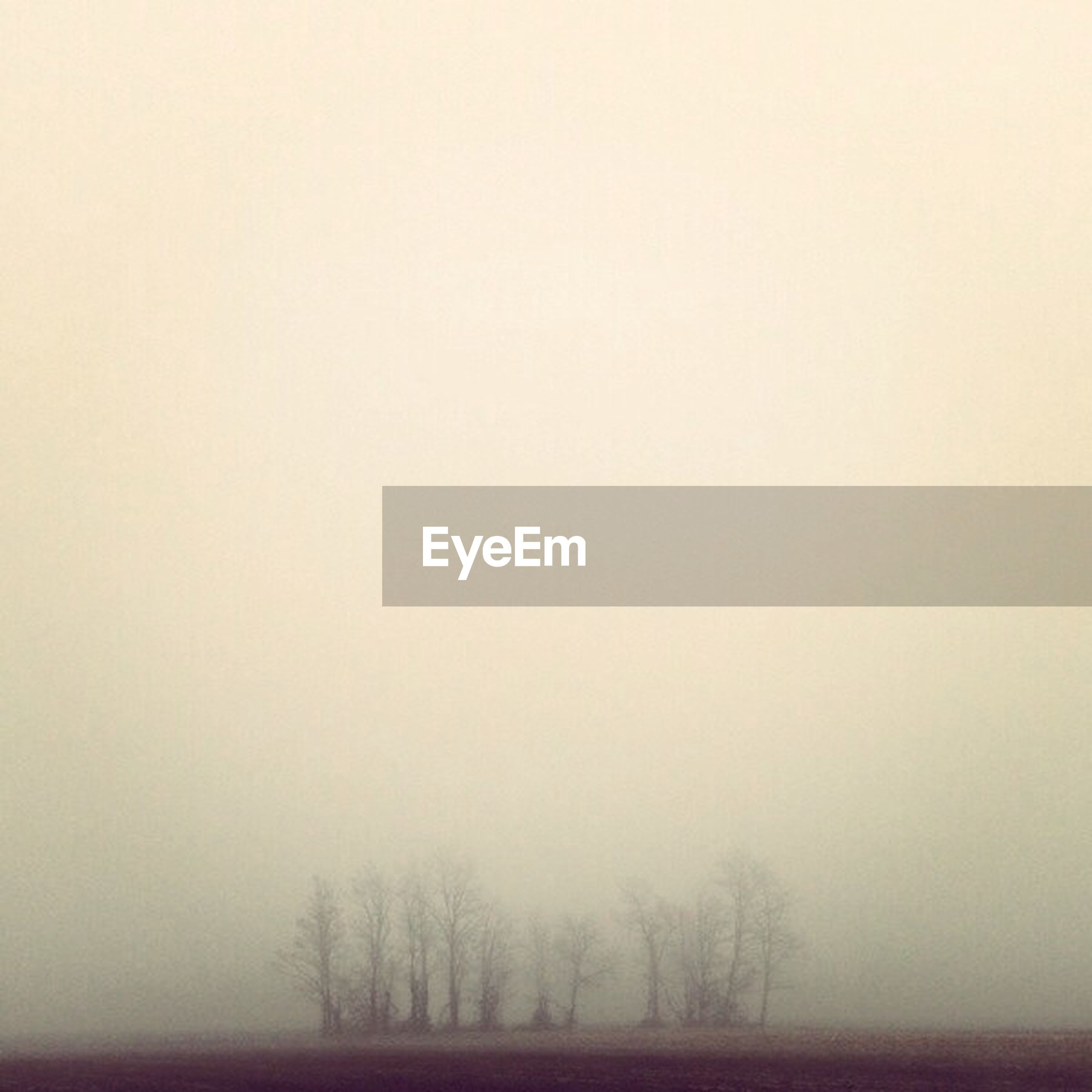 fog, copy space, tranquility, tranquil scene, foggy, tree, weather, bare tree, scenics, landscape, beauty in nature, nature, field, winter, non-urban scene, cold temperature, outdoors, idyllic, no people