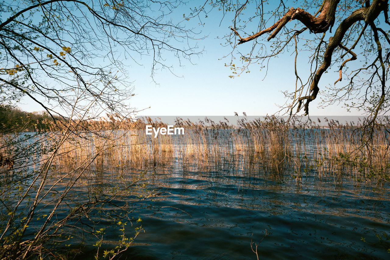 water, tree, sky, plant, tranquility, lake, nature, tranquil scene, scenics - nature, beauty in nature, no people, branch, day, bare tree, waterfront, reflection, non-urban scene, outdoors, clear sky