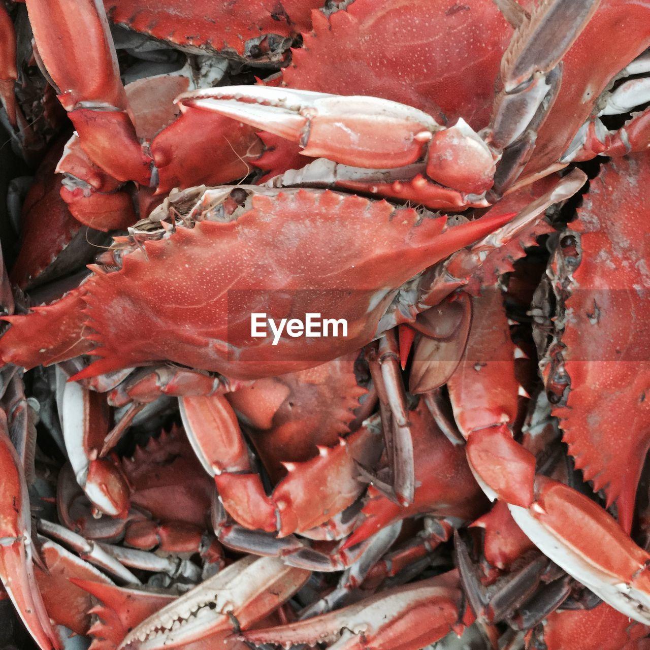 Full frame shot of crabs