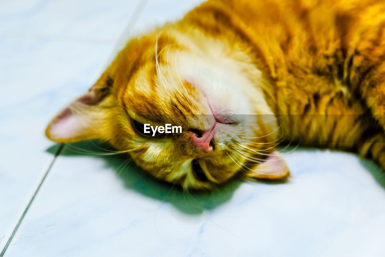 CLOSE-UP OF A CAT SLEEPING ON A BLANKET