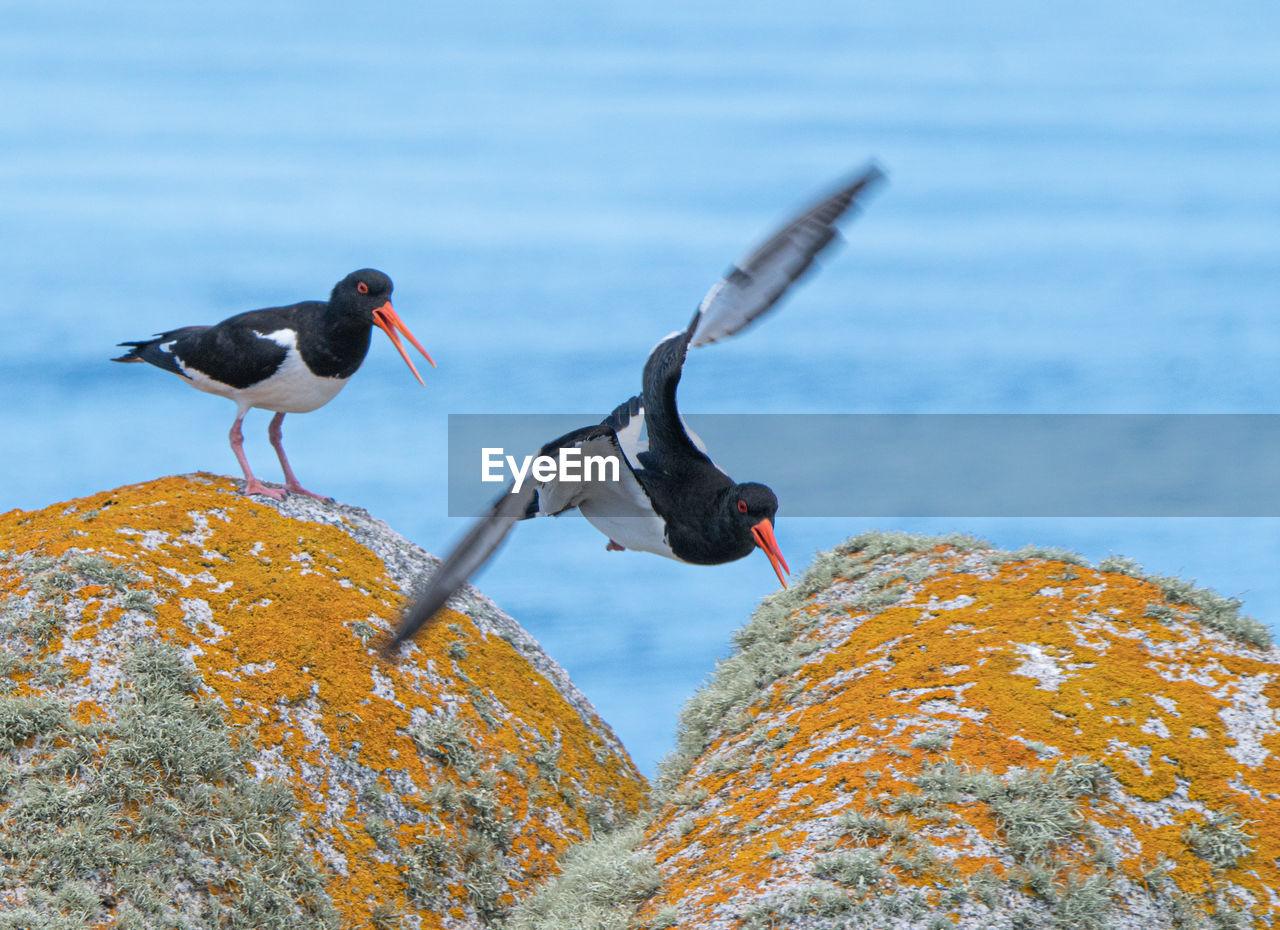 Birds flying over rock