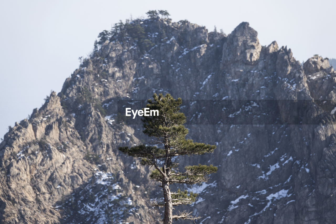 Tree Against Mountains At Seoraksan National Park During Winter