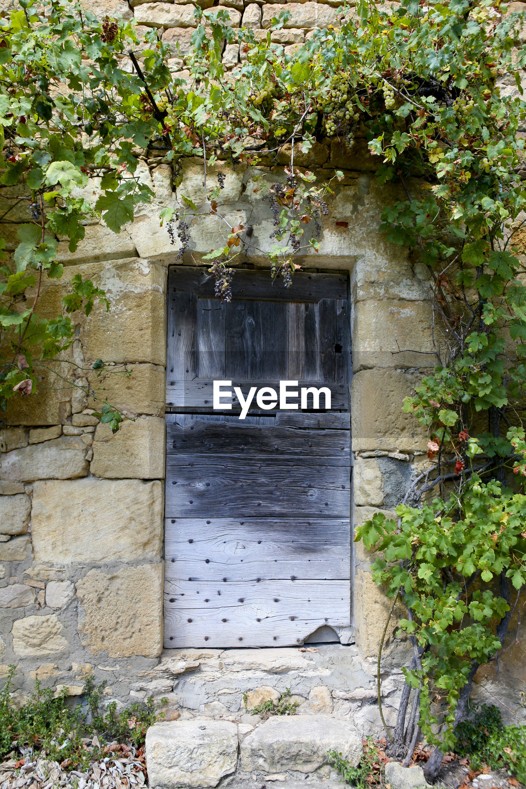 plant, architecture, built structure, entrance, growth, door, building, building exterior, no people, window, day, plant part, nature, leaf, house, outdoors, ivy, open, flower, wall