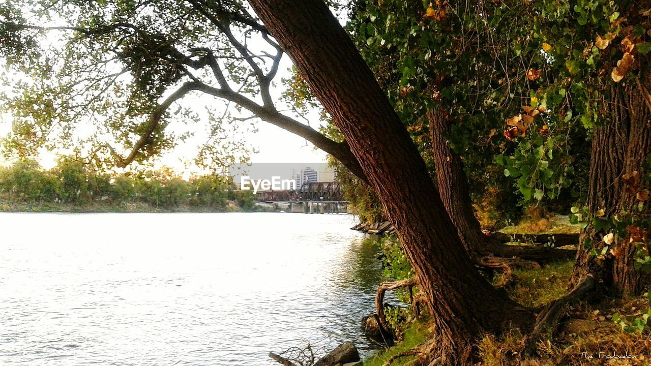 tree, tree trunk, growth, nature, tranquil scene, day, no people, river, branch, outdoors, water, tranquility, scenics, beauty in nature, built structure, architecture, sky