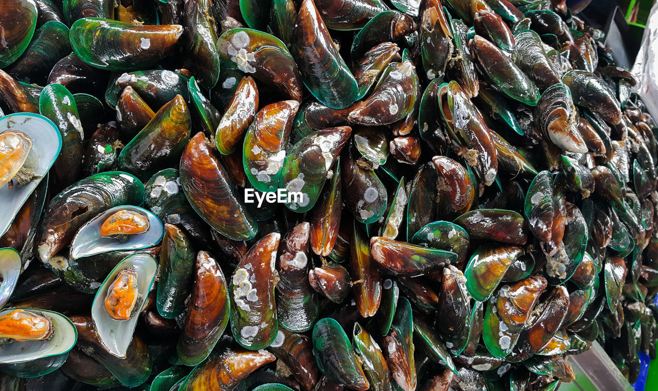 food and drink, seafood, freshness, food, healthy eating, wellbeing, no people, still life, large group of objects, full frame, abundance, mussel, backgrounds, close-up, indoors, animal, high angle view, fish, animal wildlife, ready-to-eat
