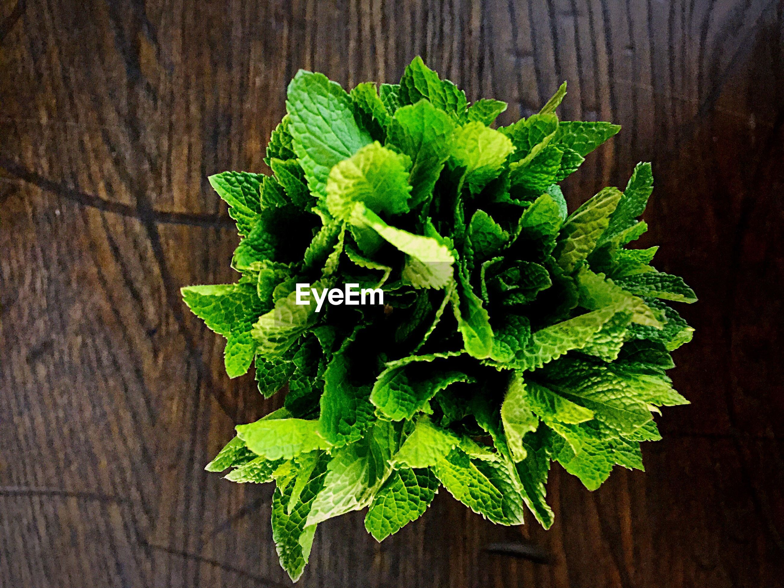 Close-up of green leaf on table
