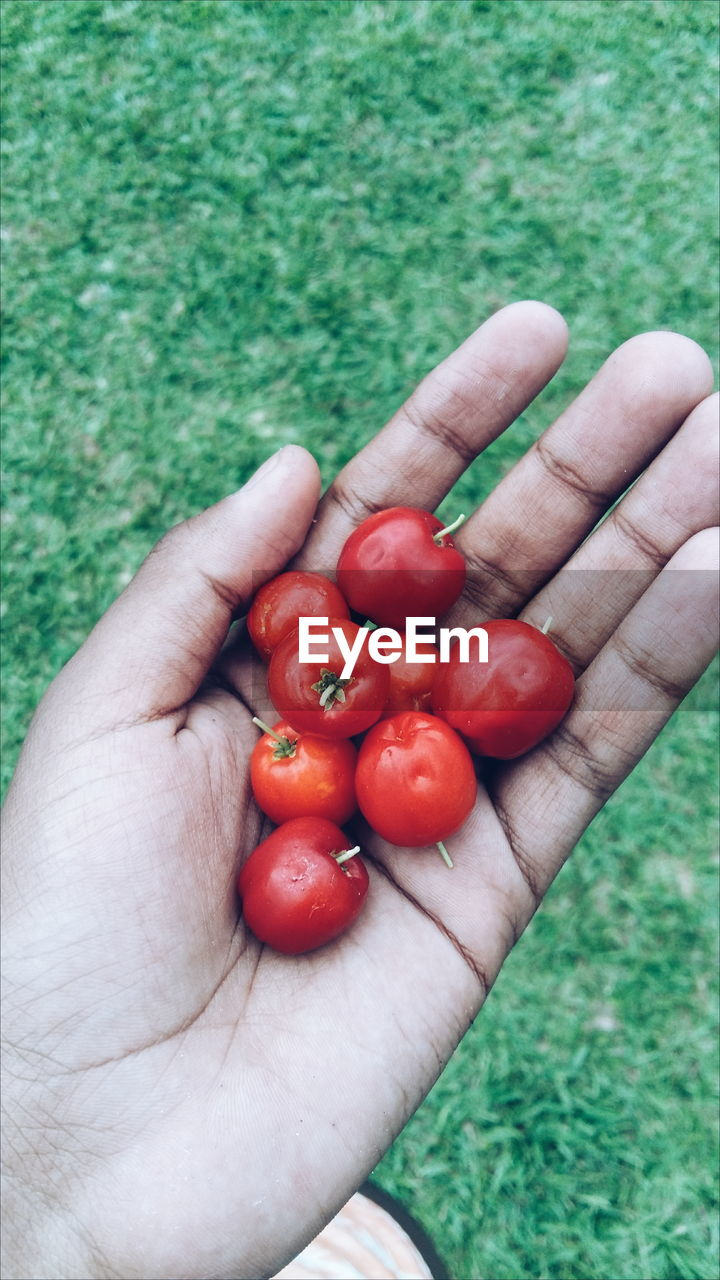 Cropped Hand Holding Cherry Tomatoes On Field