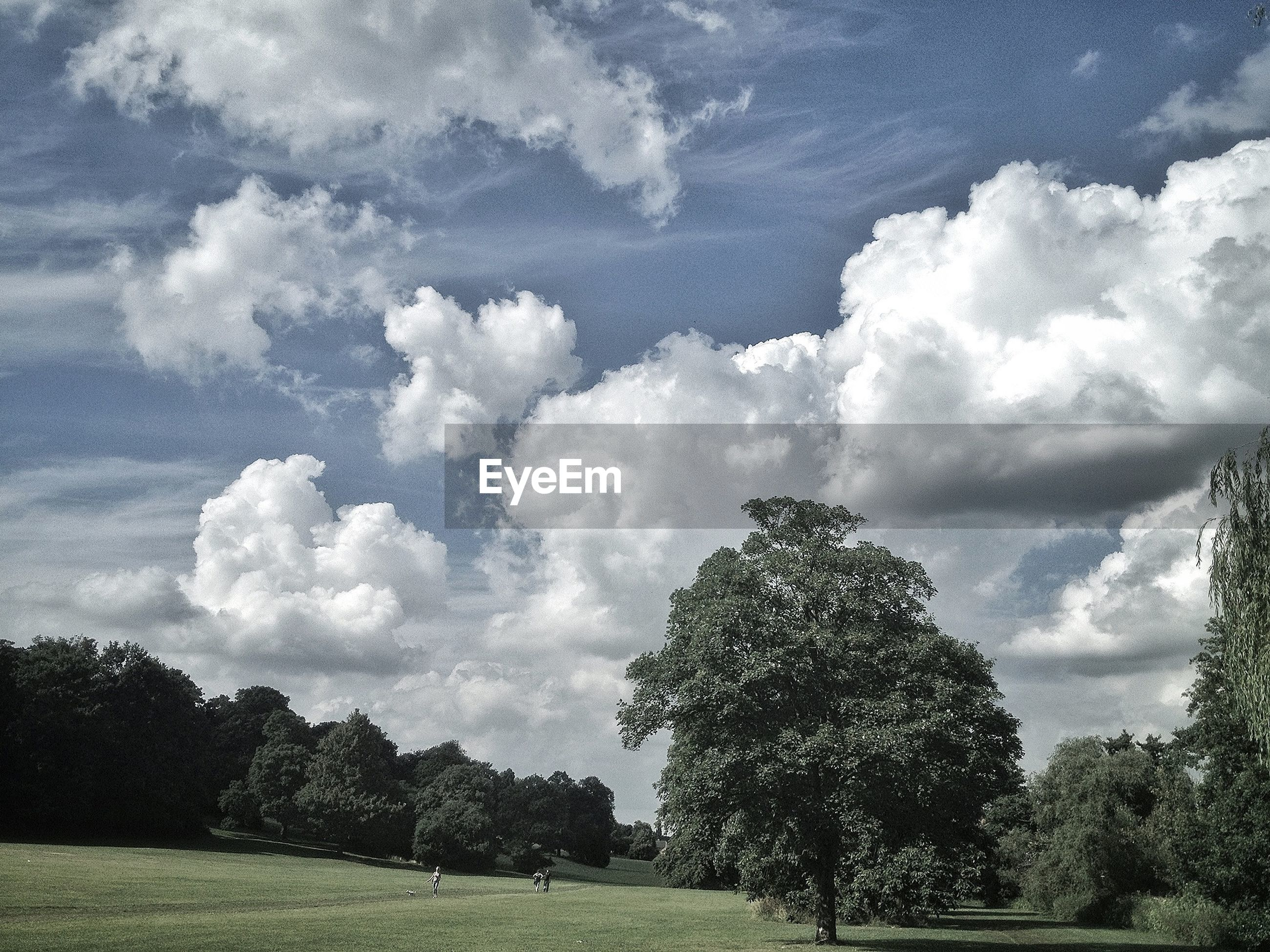 PANORAMIC SHOT OF TREES ON LANDSCAPE AGAINST CLOUDS