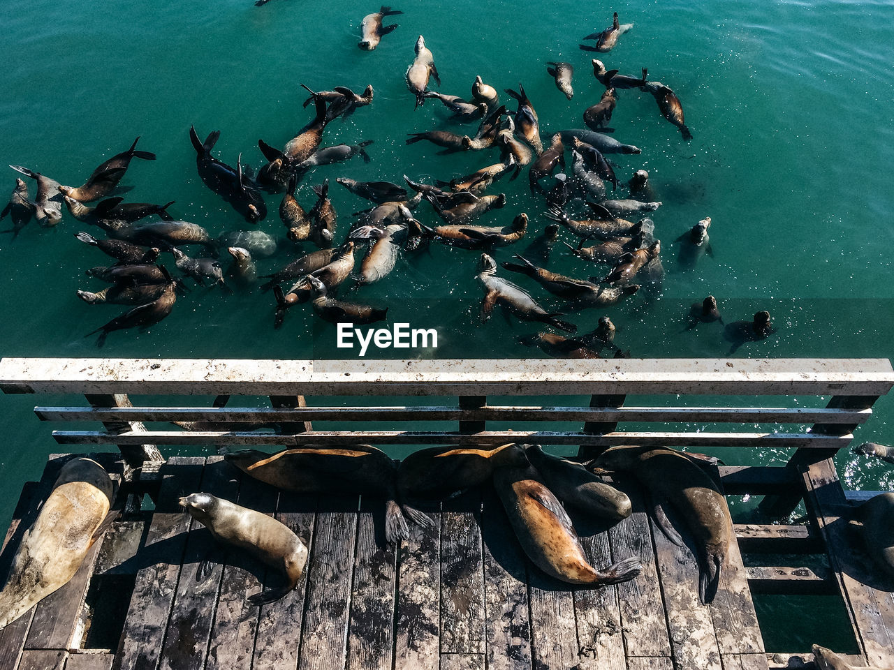 High Angle View Of Seals On Pier And Sea During Sunny Day