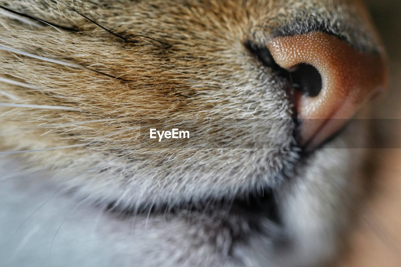 Cropped Image Of Cat Nose