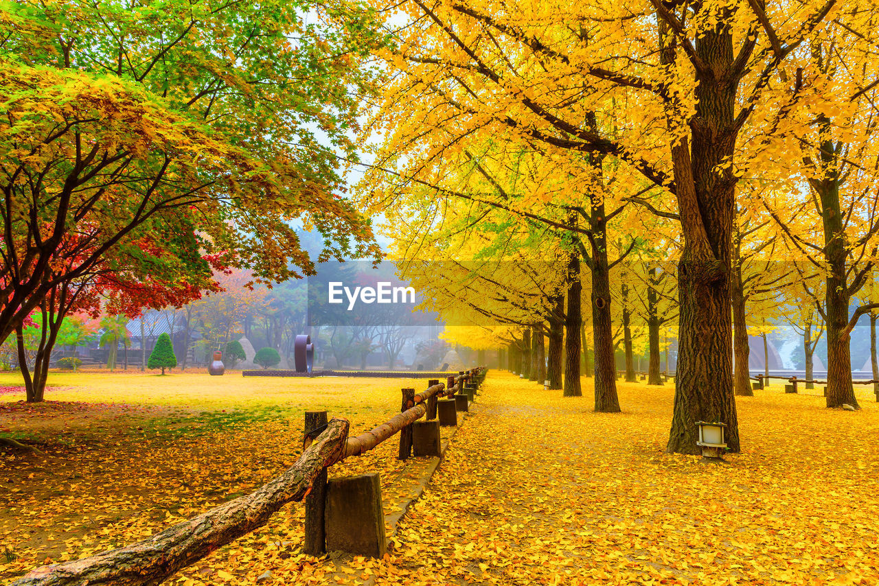 tree, autumn, plant, change, beauty in nature, nature, plant part, leaf, yellow, park, orange color, growth, seat, day, tranquility, park - man made space, bench, tree trunk, scenics - nature, trunk, no people, the way forward, outdoors, autumn collection, park bench, fall, leaves