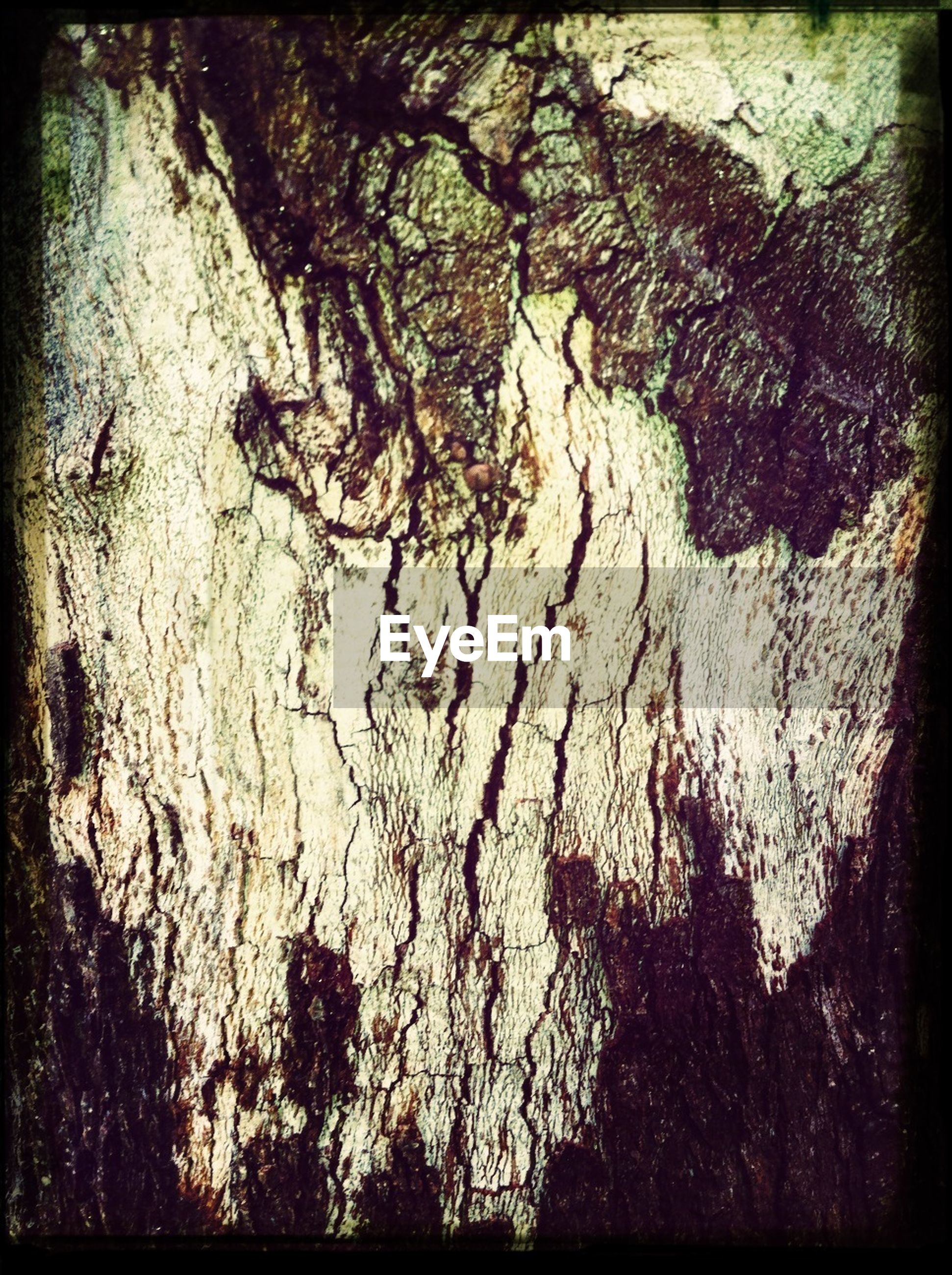 transfer print, auto post production filter, tree, branch, tree trunk, shadow, growth, nature, outdoors, sunlight, day, no people, textured, wall - building feature, close-up, silhouette, tranquility, high angle view, low angle view, bare tree