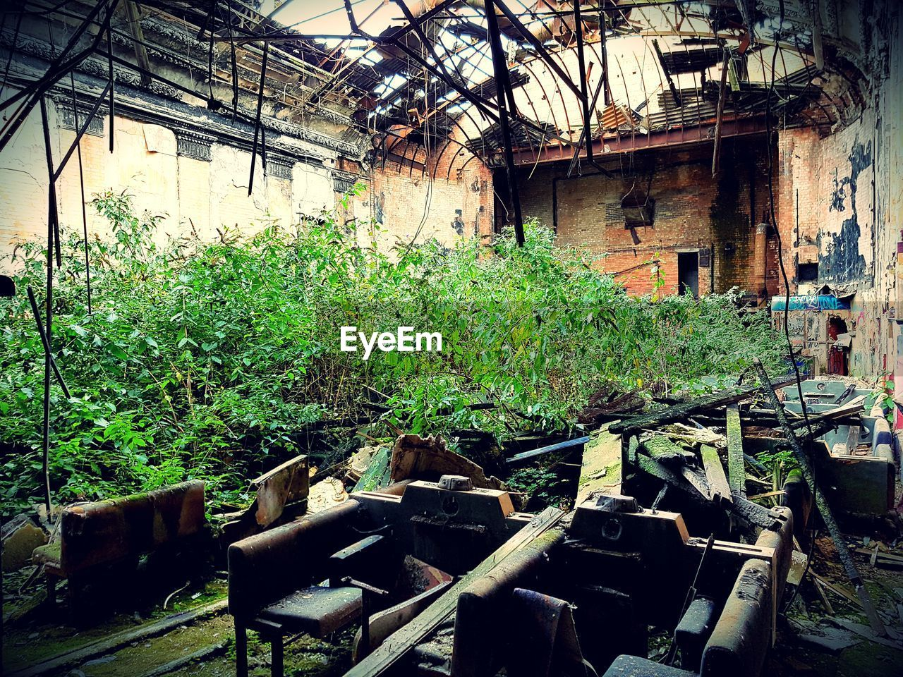 plant, abandoned, growth, no people, architecture, built structure, day, nature, indoors, greenhouse