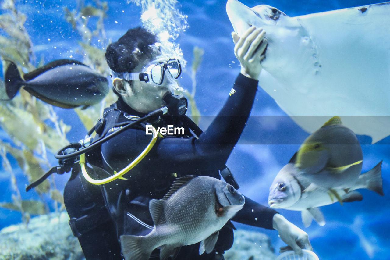 Man feeding stingray swimming in aquarium