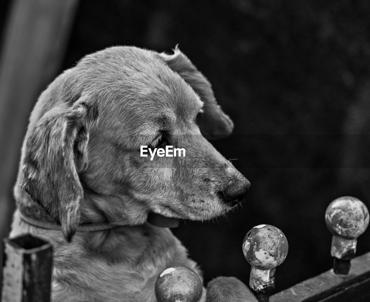 mammal, dog, canine, animal, one animal, domestic animals, animal themes, domestic, pets, focus on foreground, close-up, no people, vertebrate, looking, animal body part, day, animal head, looking away