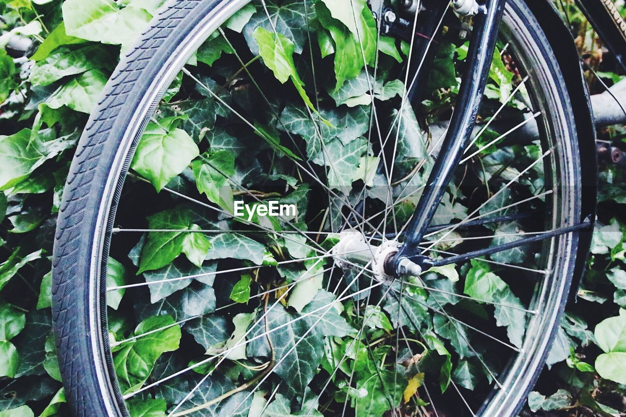 plant, high angle view, no people, close-up, growth, day, leaf, outdoors, spoke, bicycle, fragility, nature
