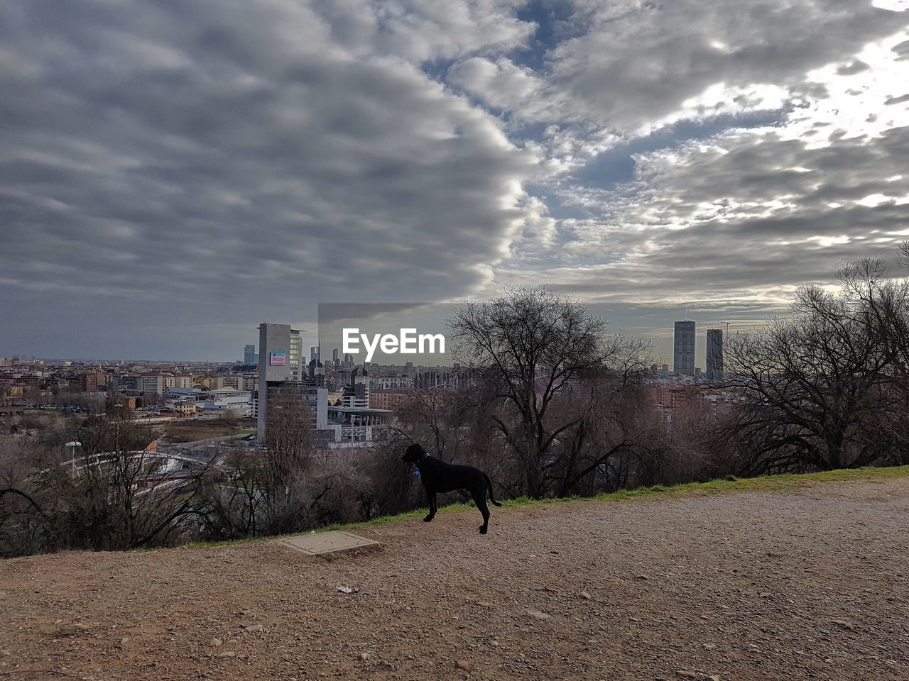 architecture, built structure, building exterior, sky, cloud - sky, one animal, domestic animals, animal themes, mammal, dog, city, skyscraper, pets, outdoors, day, no people, modern, cityscape, nature