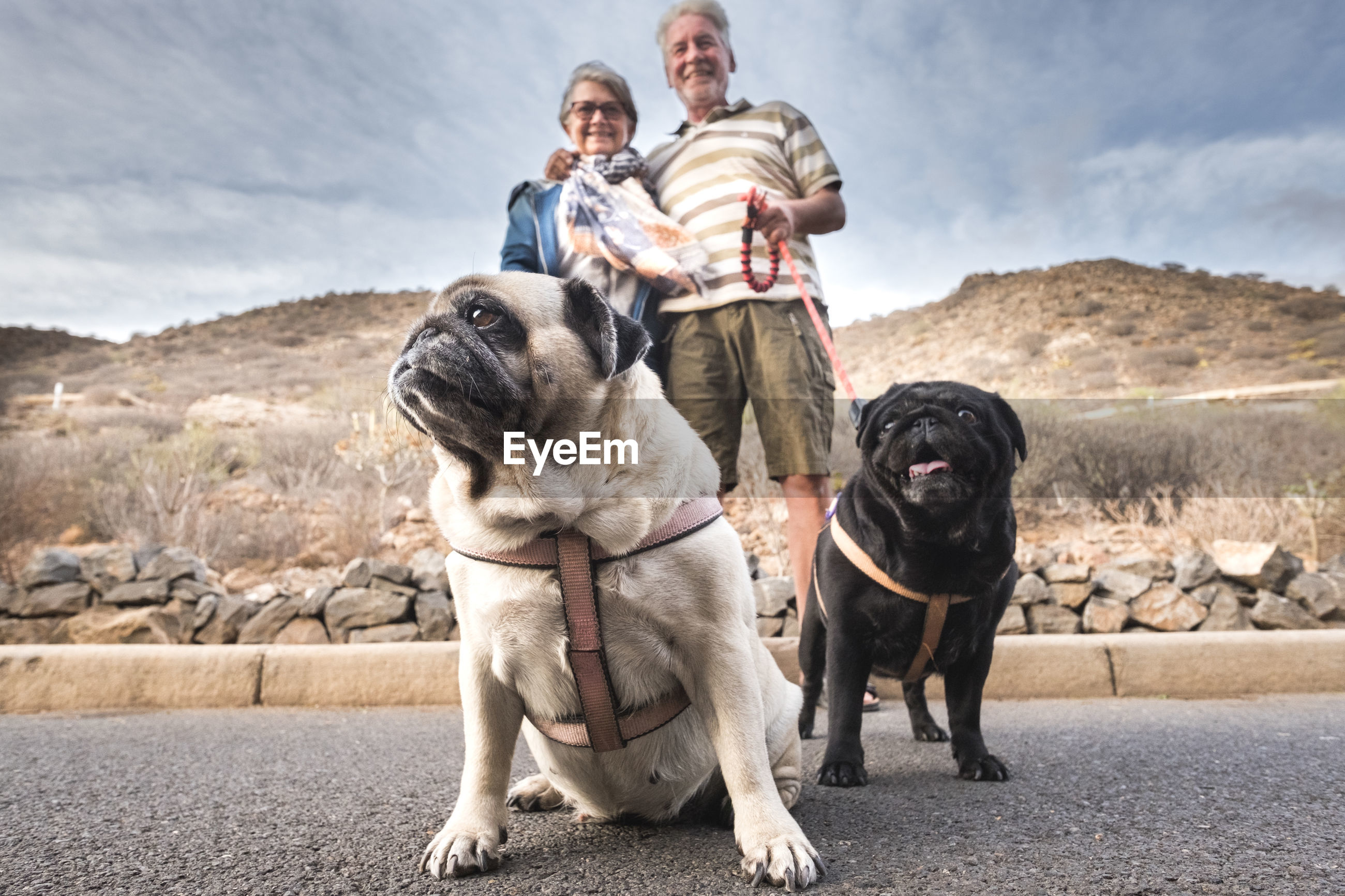 Senior couple with dogs on road