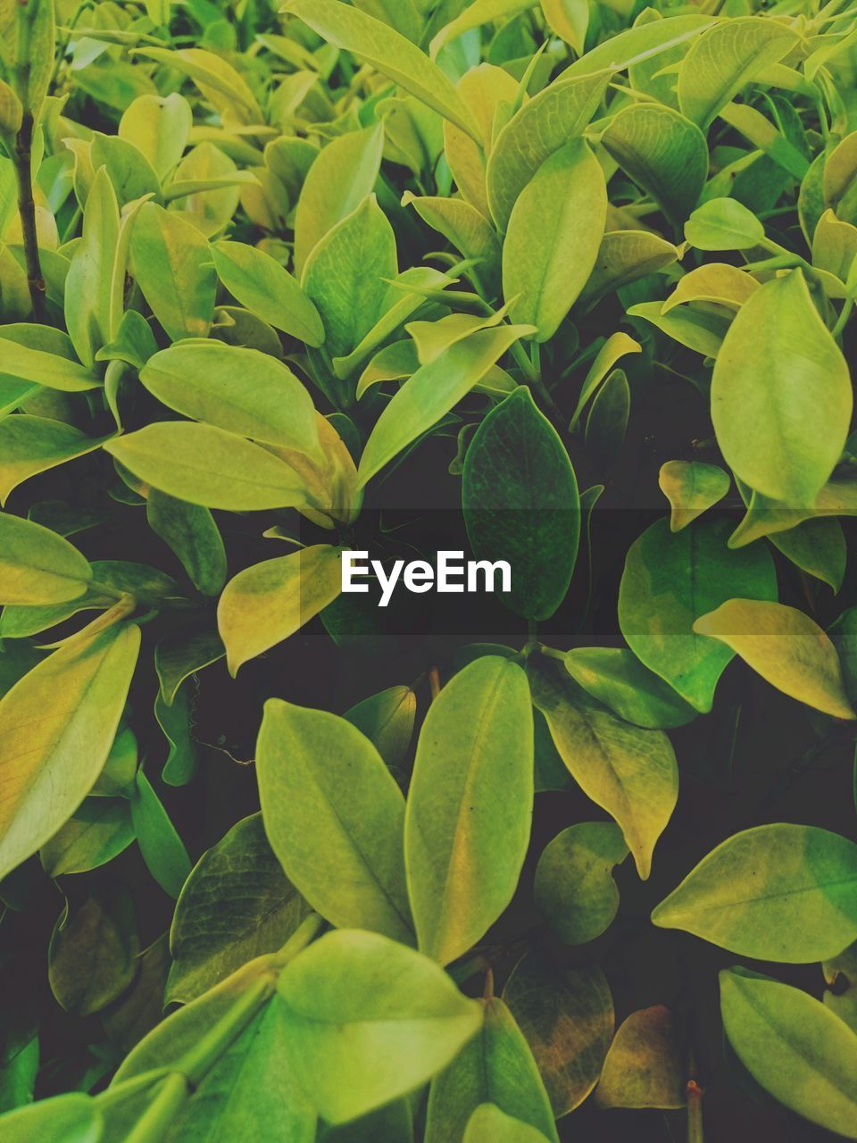 leaf, plant part, growth, green color, plant, full frame, beauty in nature, close-up, nature, no people, backgrounds, day, outdoors, high angle view, freshness, tranquility, abundance, natural pattern, directly above, foliage, leaves