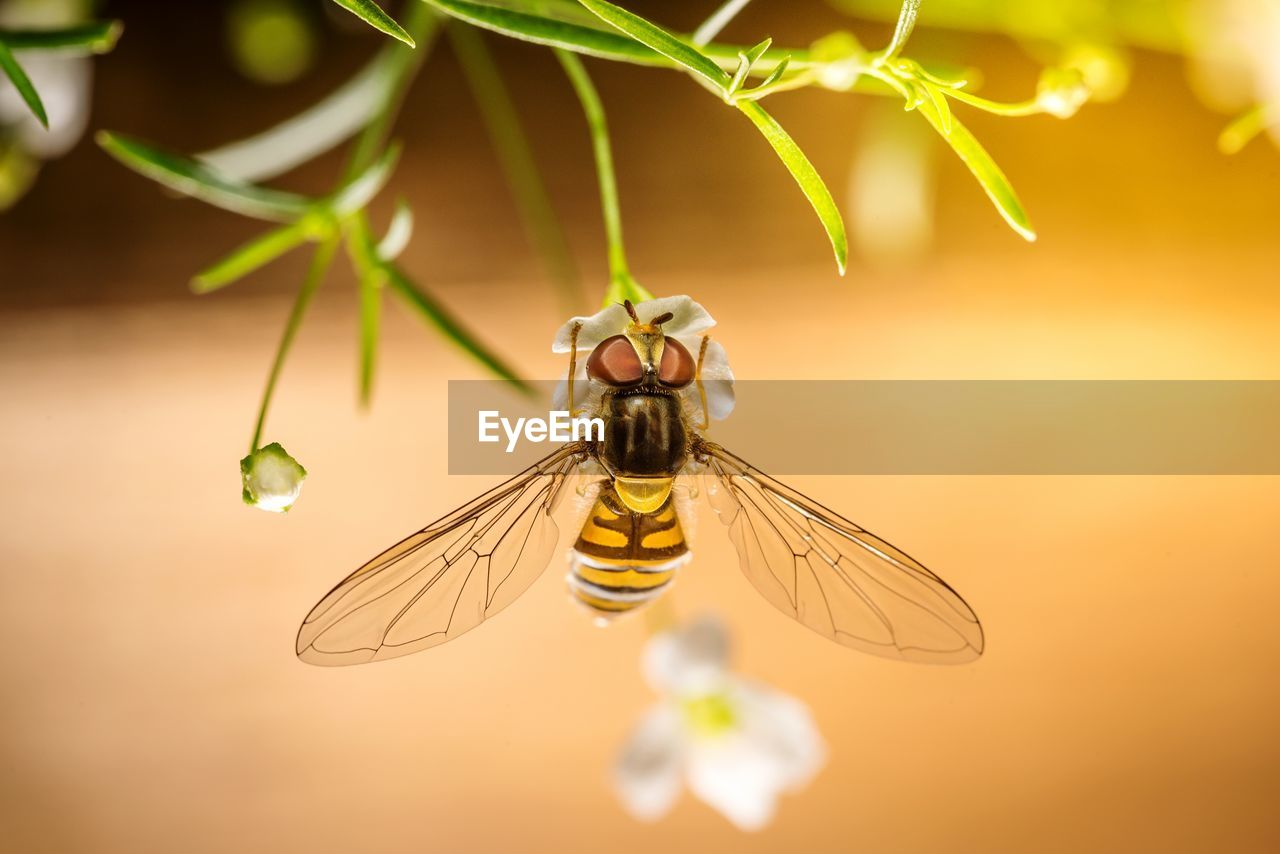 invertebrate, insect, animals in the wild, animal themes, animal, animal wildlife, close-up, one animal, beauty in nature, plant, selective focus, nature, growth, no people, focus on foreground, animal wing, fragility, flowering plant, flower, bee, outdoors, pollination, flower head