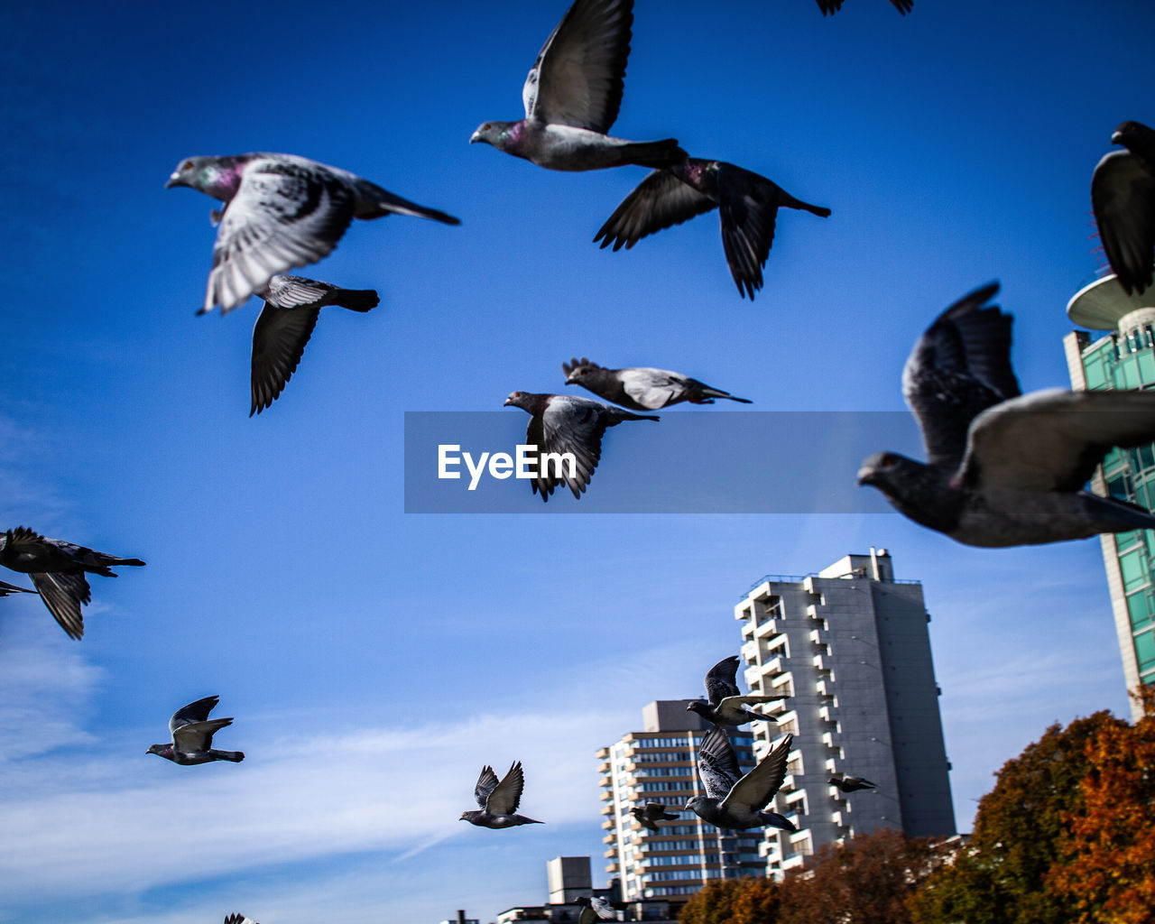 animal themes, flying, animal, group of animals, bird, animal wildlife, vertebrate, animals in the wild, sky, spread wings, low angle view, no people, mid-air, nature, large group of animals, building exterior, architecture, day, built structure, motion, flock of birds, seagull