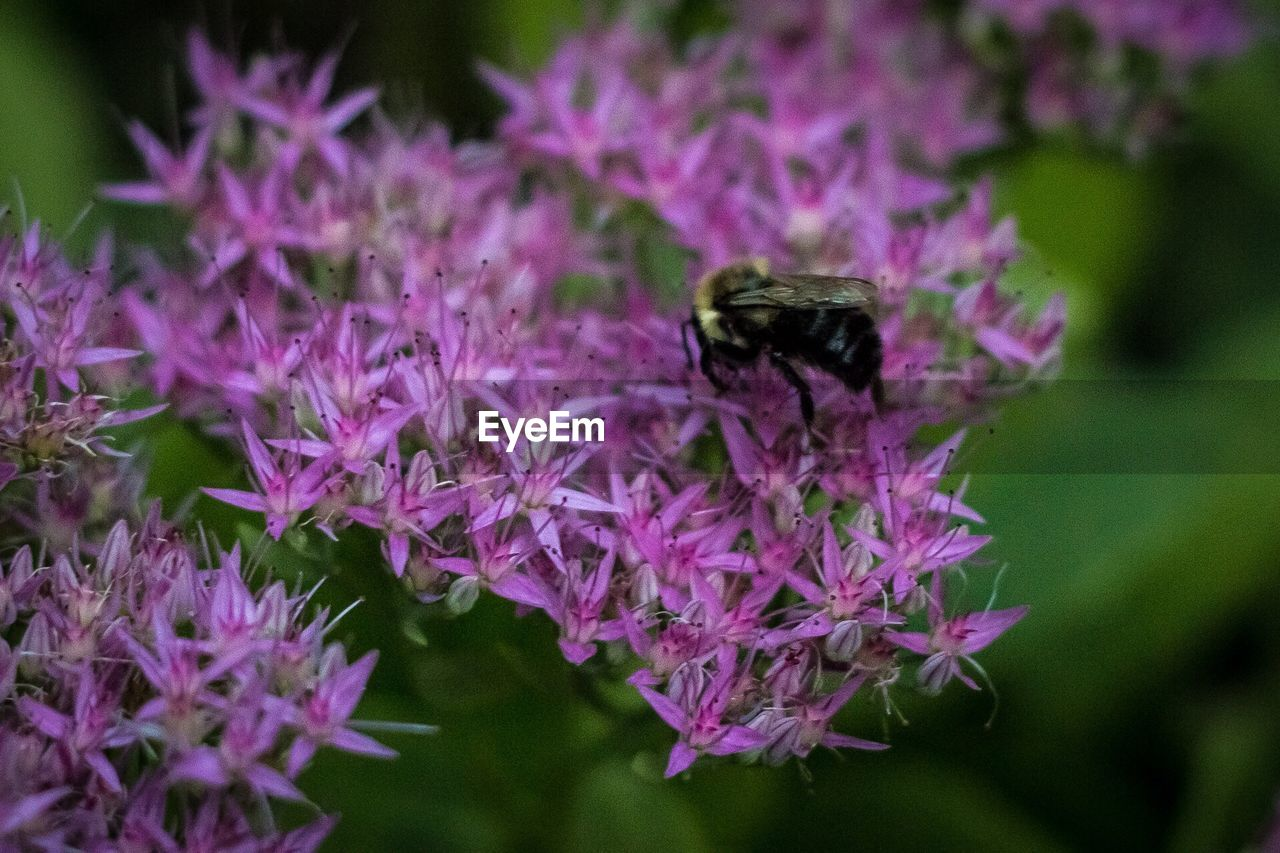 one animal, flower, insect, animal themes, animals in the wild, purple, nature, wildlife, plant, growth, fragility, petal, beauty in nature, focus on foreground, no people, freshness, day, animal wildlife, outdoors, close-up, pollination, bee, flower head