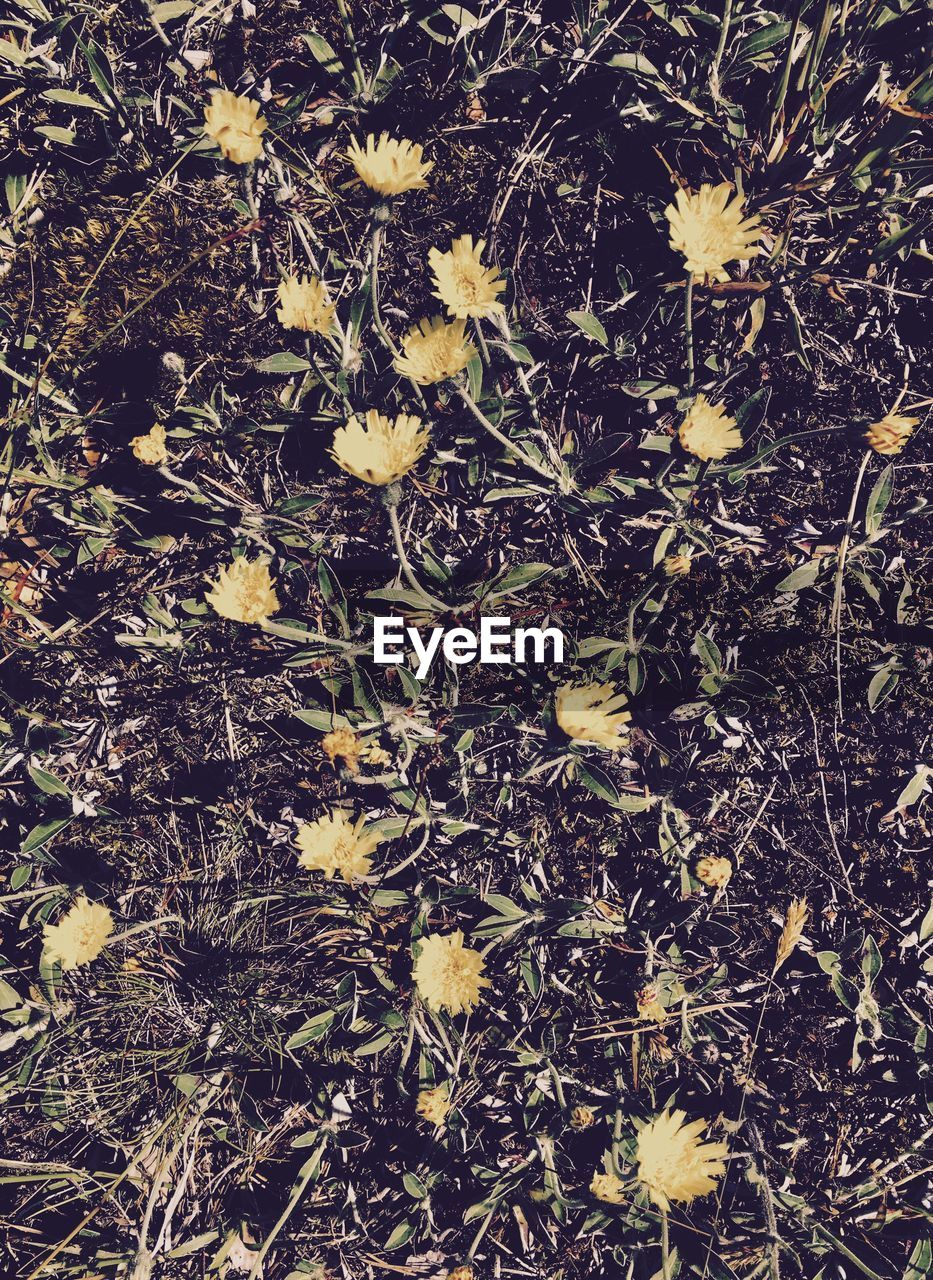 flower, nature, growth, leaf, yellow, fragility, plant, high angle view, field, no people, outdoors, day, petal, autumn, beauty in nature, close-up, grass, flower head, freshness
