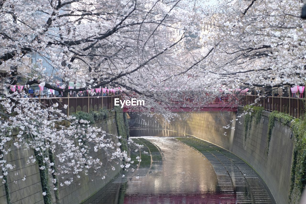VIEW OF CHERRY BLOSSOM TREES AGAINST SKY