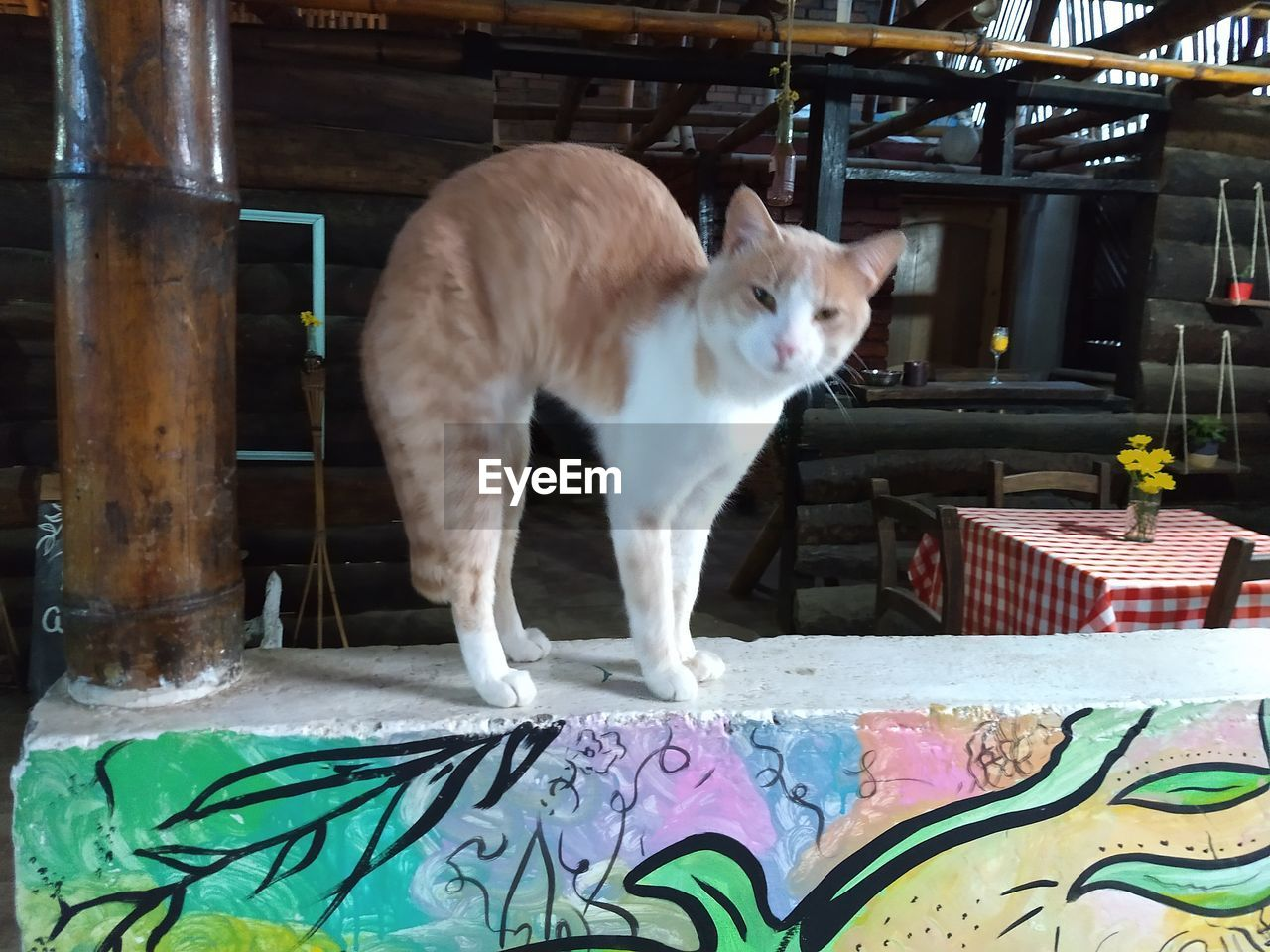 domestic, pets, mammal, domestic animals, one animal, vertebrate, domestic cat, cat, feline, no people, indoors, sitting, graffiti, day, container, full length, looking, whisker