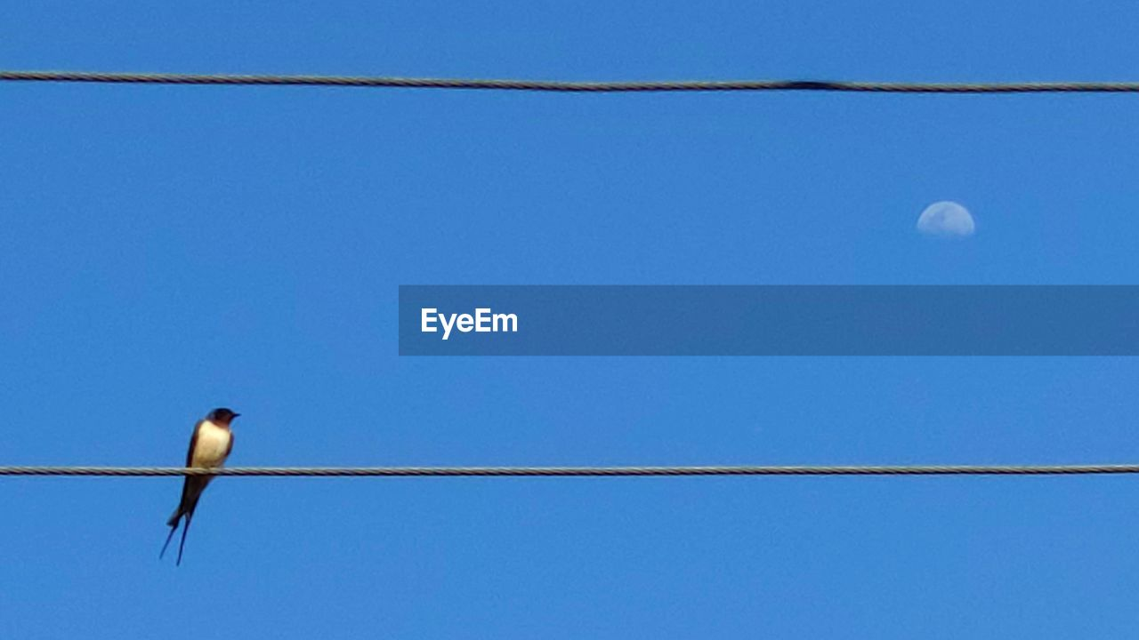 sky, vertebrate, bird, blue, animal themes, low angle view, clear sky, cable, moon, animal, no people, animal wildlife, animals in the wild, one animal, nature, perching, copy space, power line, outdoors, electricity, telephone line, planetary moon