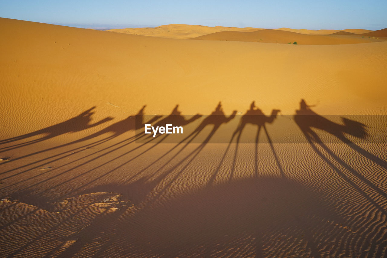 sand dune, desert, sand, landscape, scenics - nature, sky, land, nature, shadow, beauty in nature, environment, sunset, tranquil scene, sunlight, no people, camel, arid climate, climate, tranquility, group of animals, focus on shadow, outdoors