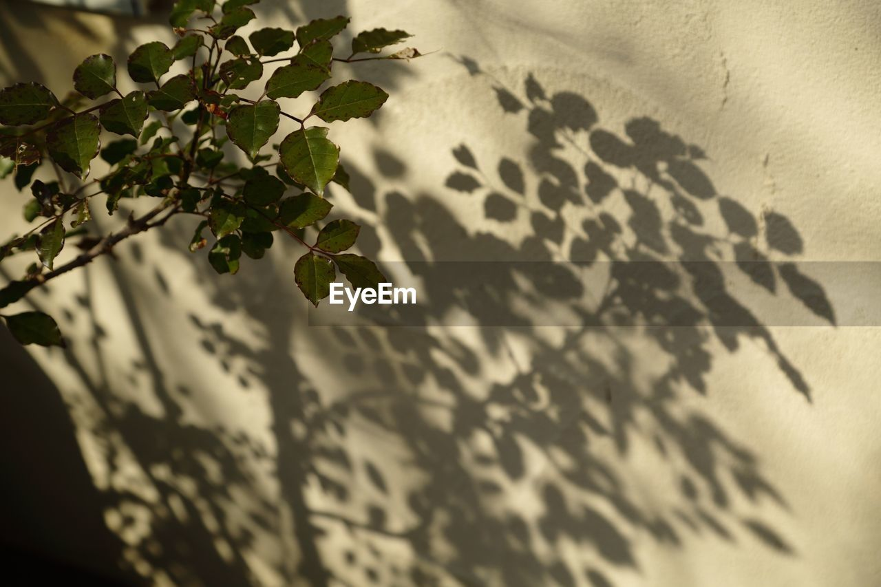 leaf, nature, growth, plant, shadow, no people, close-up, outdoors, day