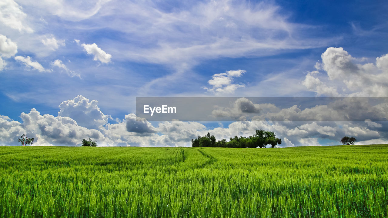 cloud - sky, field, plant, green color, sky, landscape, agriculture, scenics - nature, beauty in nature, land, environment, tranquil scene, tranquility, rural scene, growth, grass, nature, crop, day, farm, no people, outdoors