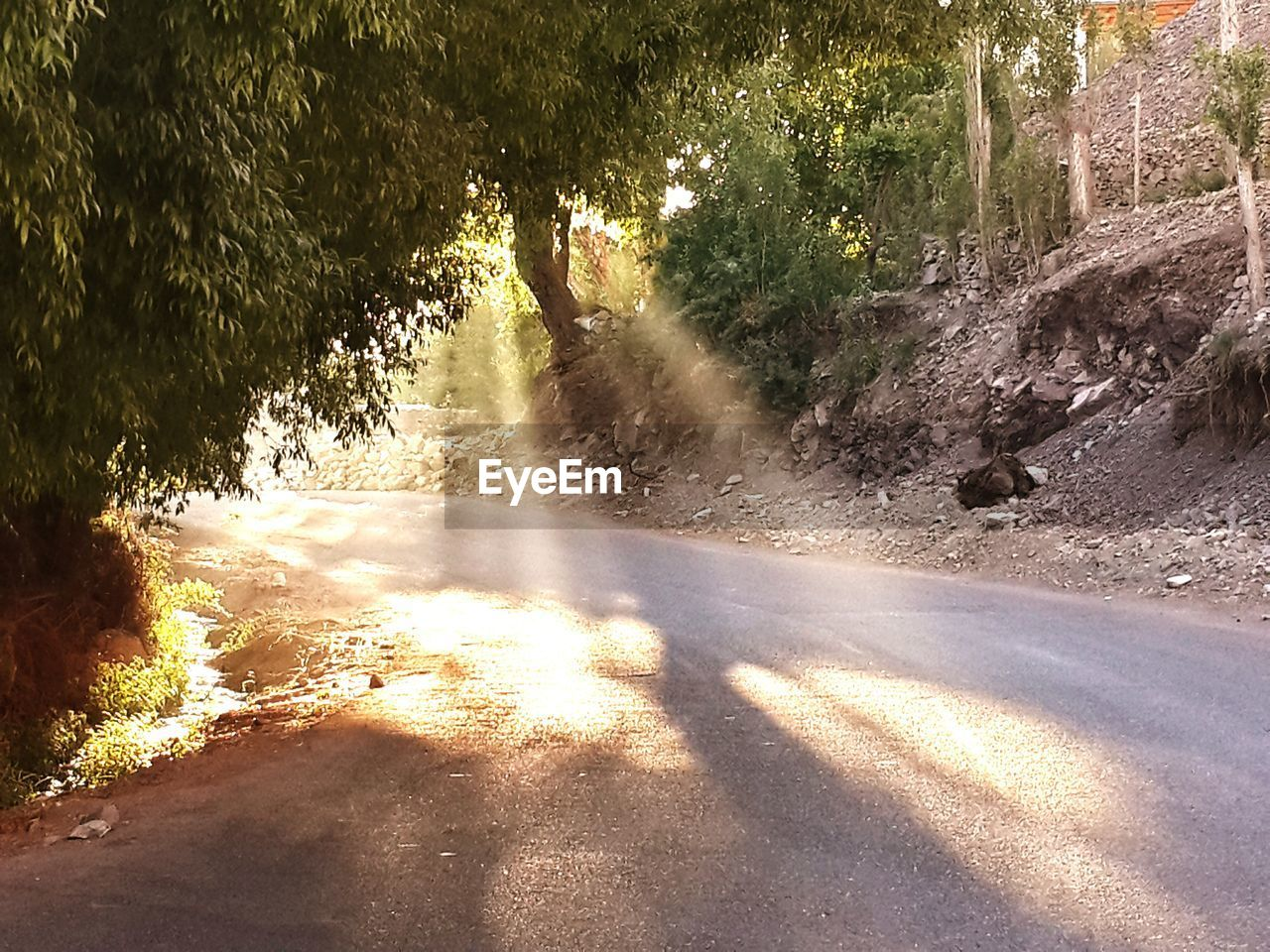sunlight, tree, day, shadow, nature, no people, outdoors, water, road, beauty in nature, sky