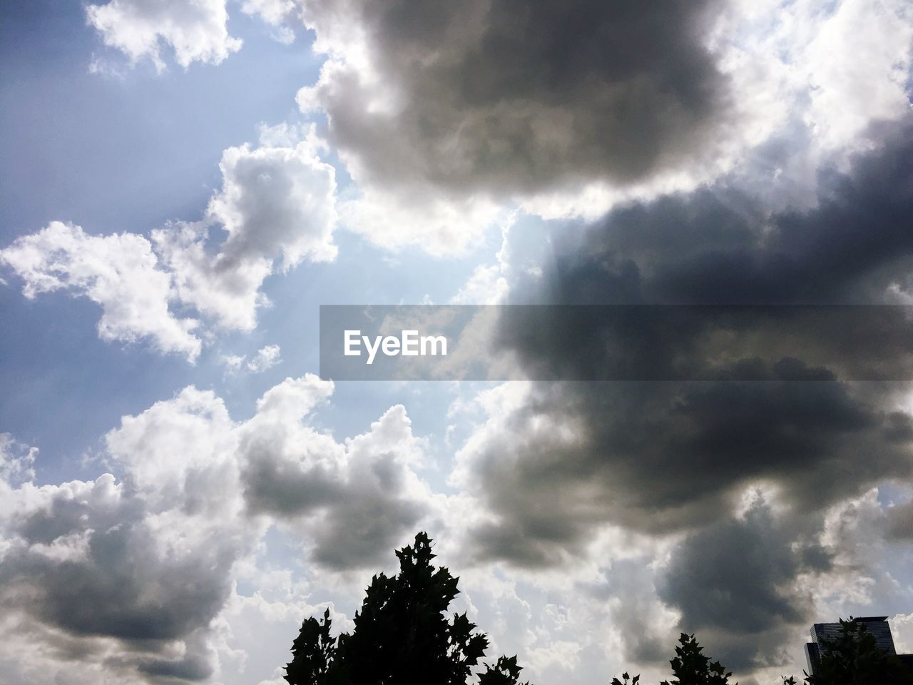 sky, beauty in nature, cloud - sky, nature, tree, low angle view, scenics, day, tranquility, no people, outdoors, growth