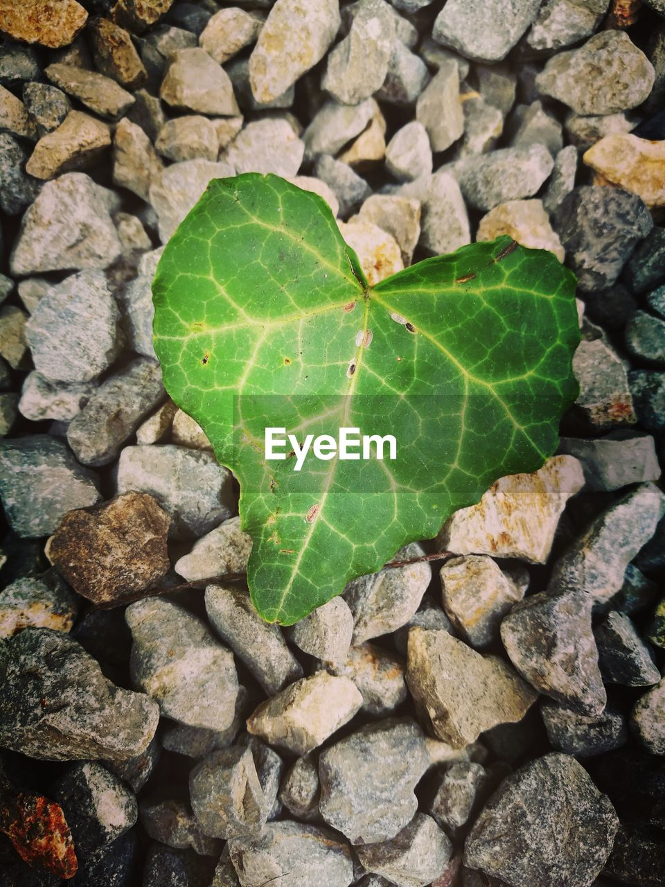 leaf, high angle view, day, close-up, green color, outdoors, no people, autumn, nature, fragility, water
