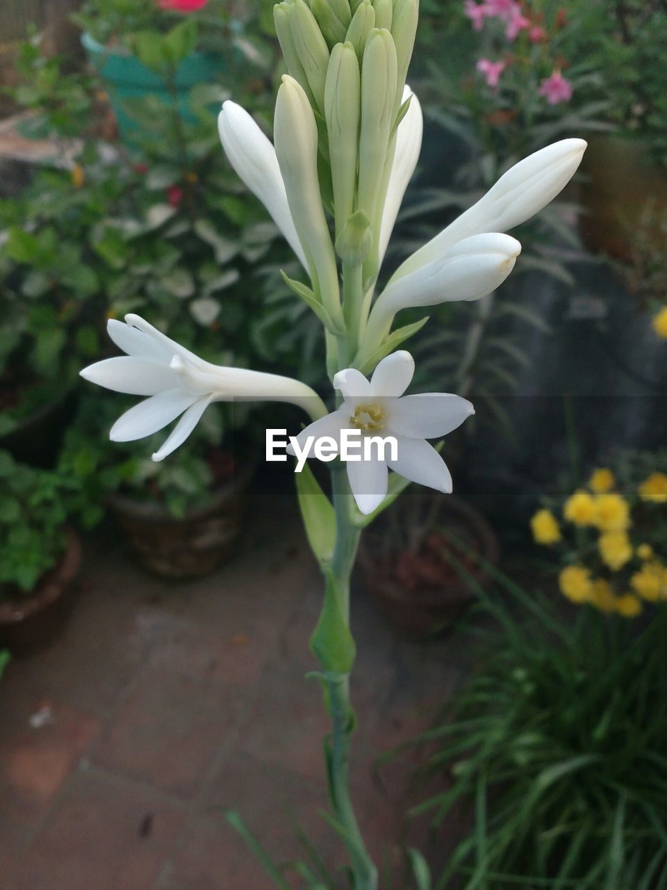 flower, petal, growth, nature, fragility, white color, plant, beauty in nature, flower head, freshness, no people, blooming, day, outdoors, close-up