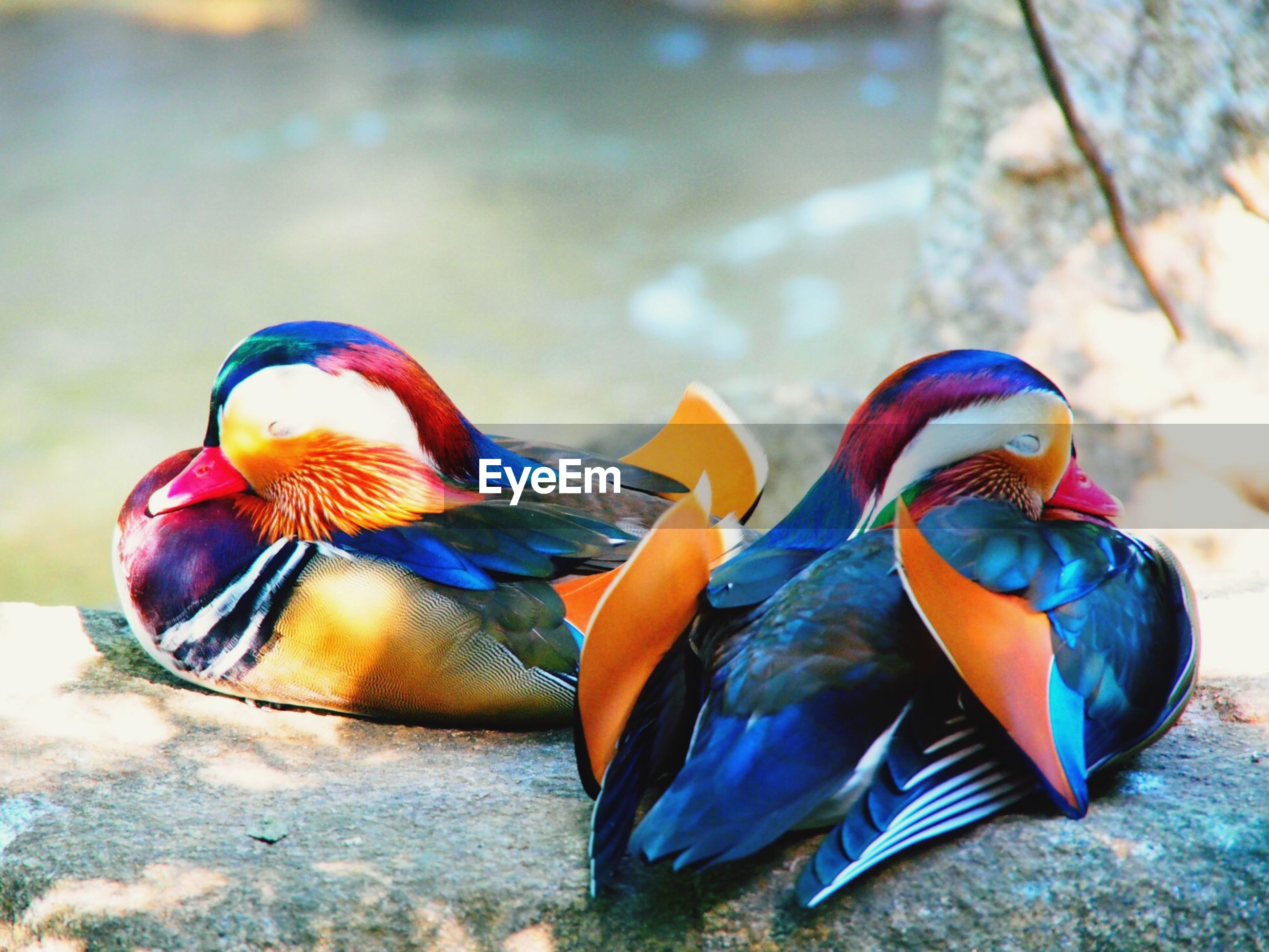 animal themes, bird, animals in the wild, multi colored, wildlife, one animal, focus on foreground, peacock, close-up, nature, beak, feather, day, blue, outdoors, no people, two animals, beauty in nature, sunlight, side view