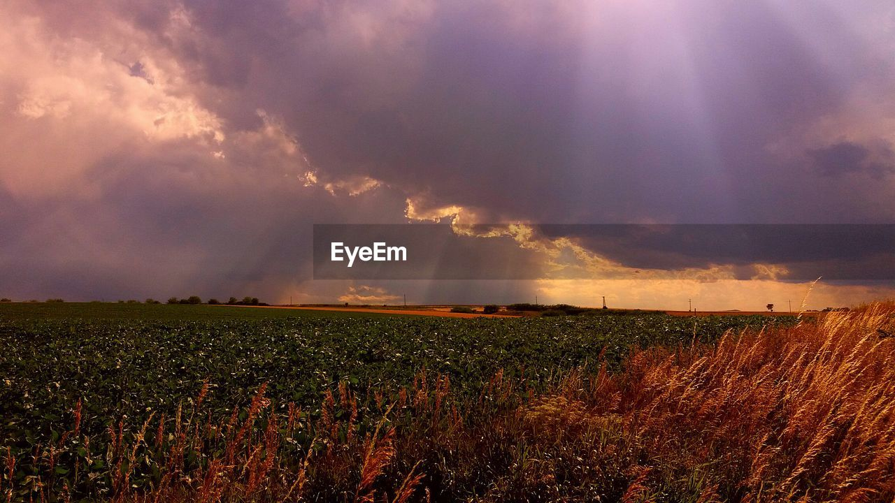 field, nature, beauty in nature, landscape, agriculture, sky, cloud - sky, tranquility, growth, tranquil scene, scenics, rural scene, plant, storm cloud, no people, outdoors, sunset, day