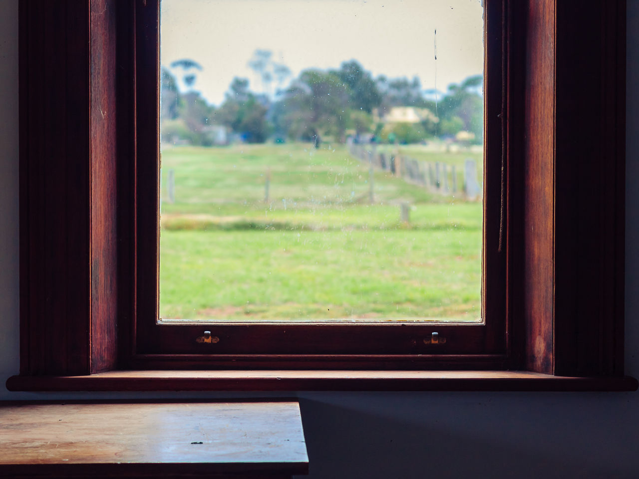window, indoors, no people, day, focus on foreground, green color, close-up, nature, tree