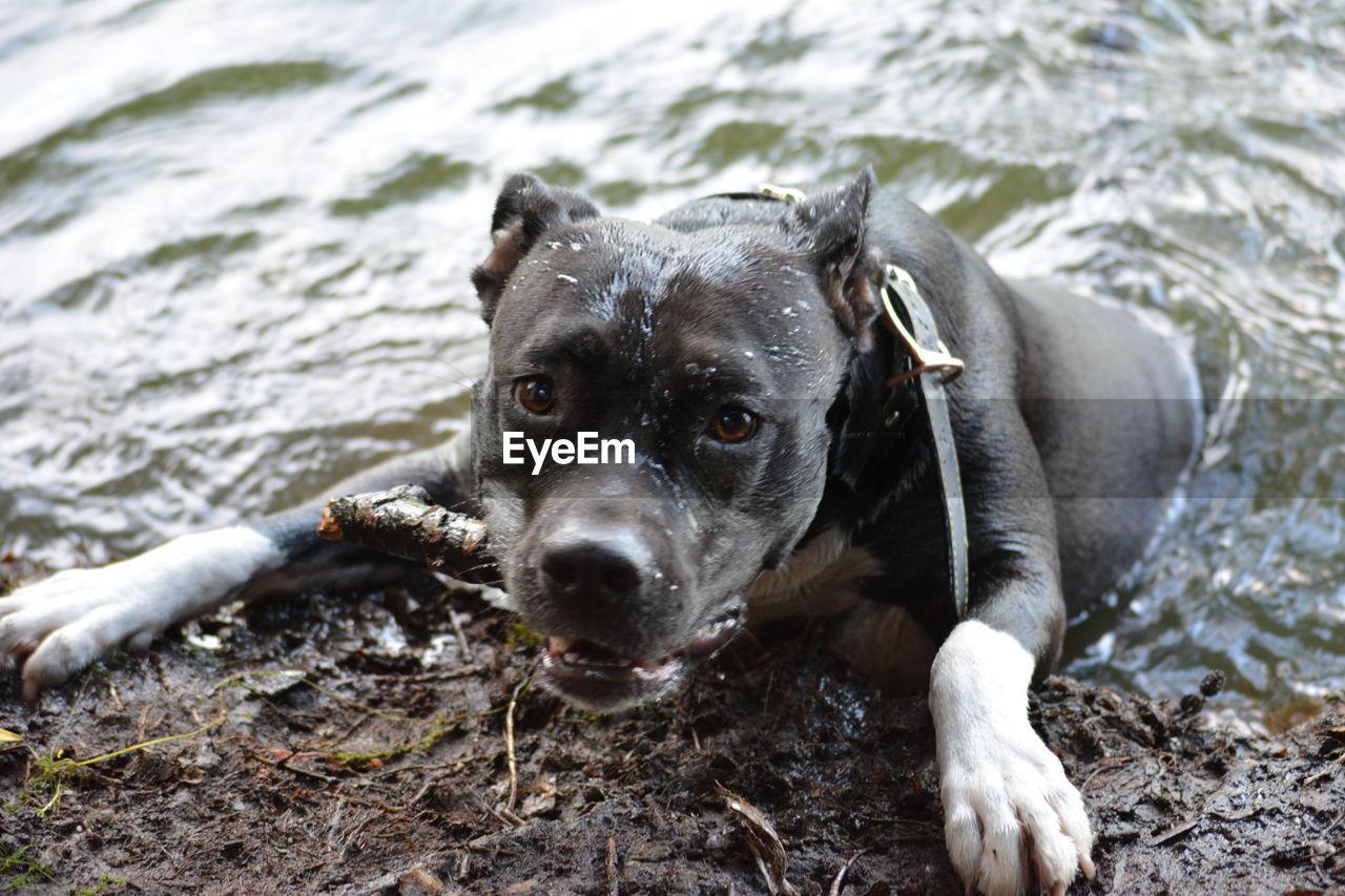 Close-Up Of Playful Wet Dog