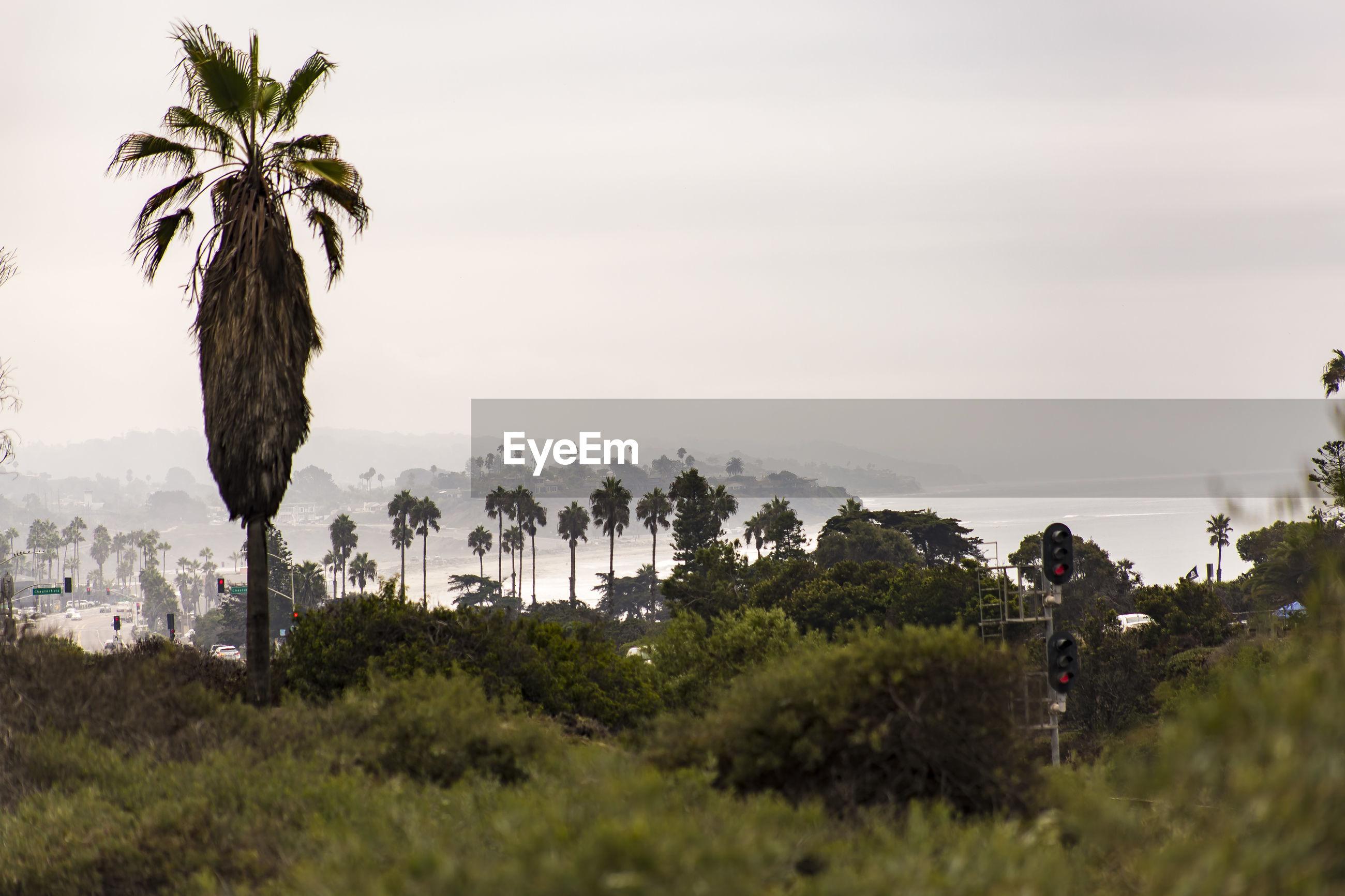 Palm trees against sky at beach