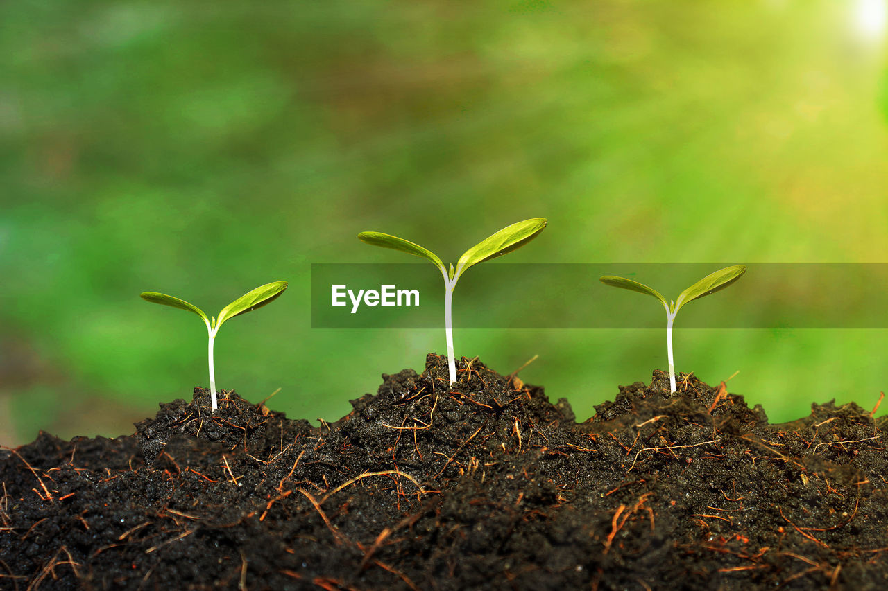growth, plant, beauty in nature, land, field, nature, no people, beginnings, plant part, vulnerability, day, fragility, leaf, close-up, selective focus, seedling, outdoors, new life, tranquility, green color, small, plantation, gardening