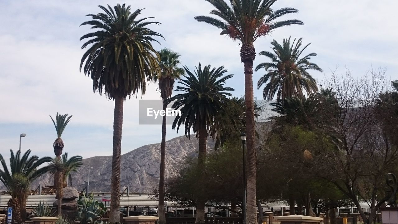 palm tree, tree, growth, sky, day, nature, palm frond, outdoors, tree trunk, scenics, beauty in nature, water, real people