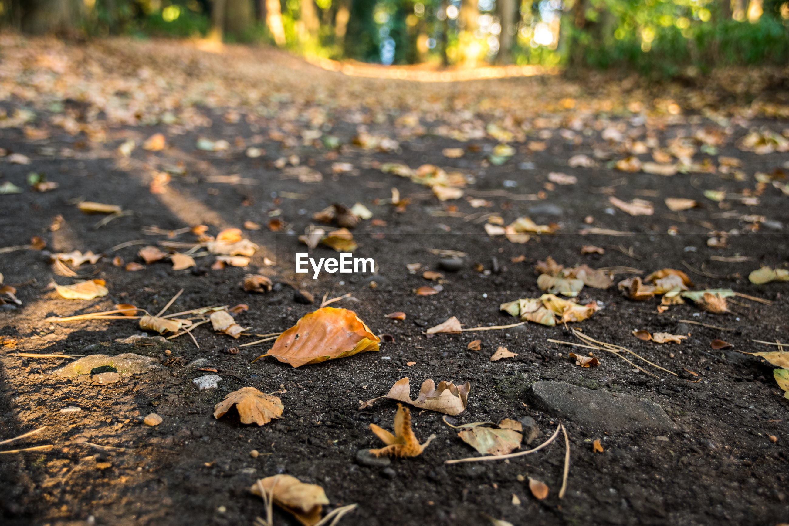 Dry leaves on road