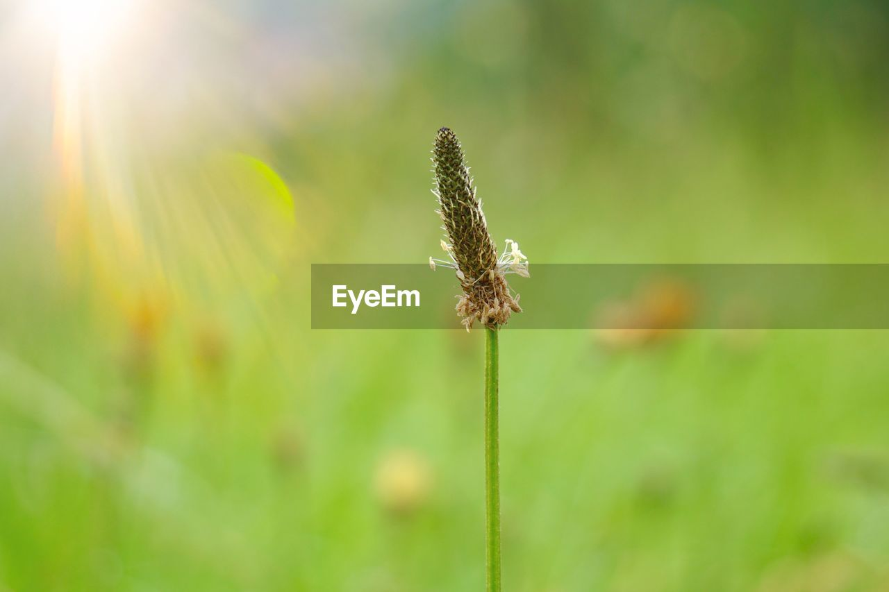 plant, growth, beauty in nature, flower, close-up, flowering plant, nature, fragility, focus on foreground, vulnerability, day, freshness, no people, green color, plant stem, selective focus, sunlight, tranquility, field, flower head